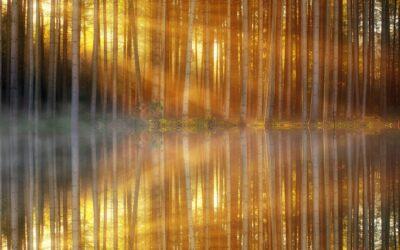 Come comportarsi con la luce ambientale