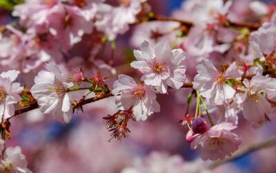 Come fotografare la magia della primavera?