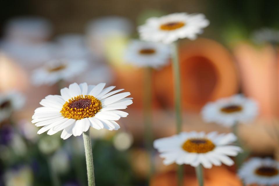 come-fotografare-la-magia-della-primavera-fiori