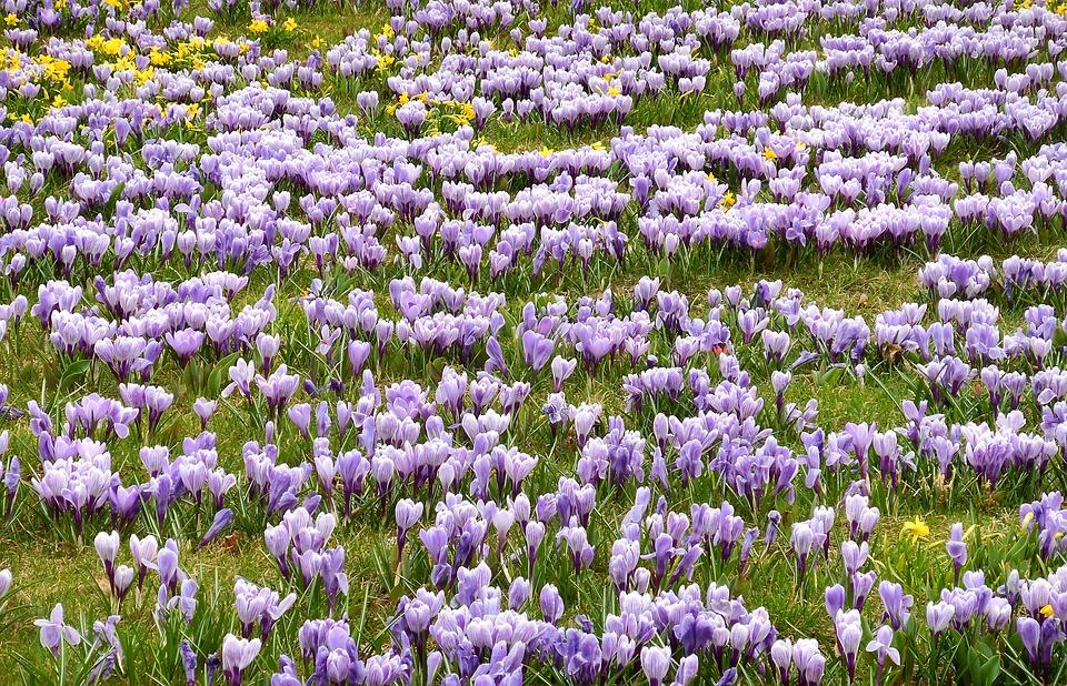 come-fotografare-la-magia-della-primavera-prato-fiorito