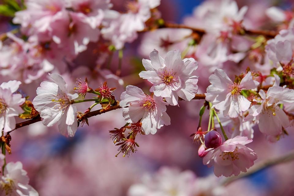 come fotografare la magia della primavera
